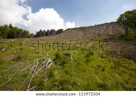 deforestation in a forest in england - stock photo