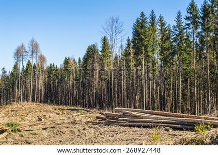Deforestation in Carpathian mountains - stock photo