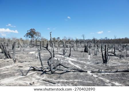 deforestation in Madagascar - stock photo