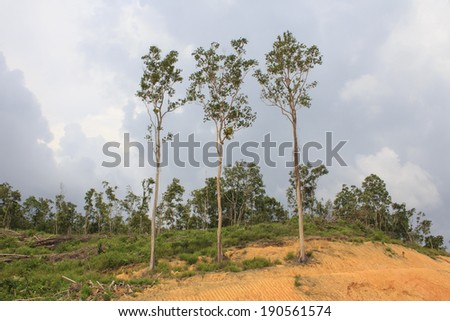 Deforestation: Jungle Rain Forest in Borneo, Malaysia, is destroyed to make way for oil palm plantations - stock photo