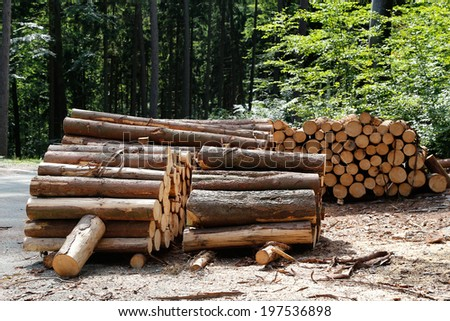 deforestation, stump stack trees trunks in pine forest - stock photo