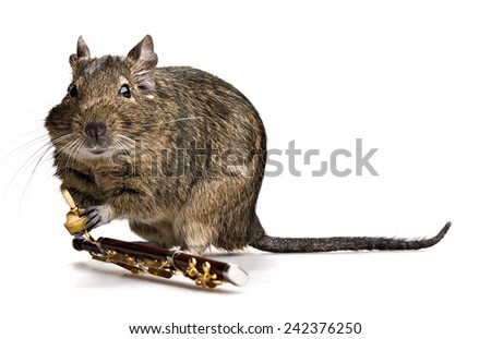 degu pet musician with bassoon isolated on white background - stock photo
