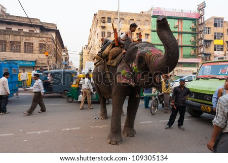 DELHI, INDIA - NOVEMBER 5,: An elephant causes a chaotic traffic jam on a downtown street on November 5, 2009 in Delhi, India - stock photo