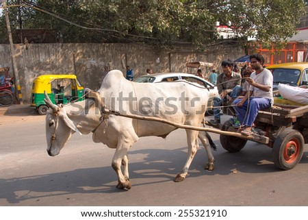 DELHI, INDIA - NOVEMBER 5: Unidentified people ride in bullock cart on November 5, 2014 in Delhi, India. As modern vehicles are too expensive bullock carts are still in use in Delhi. - stock photo
