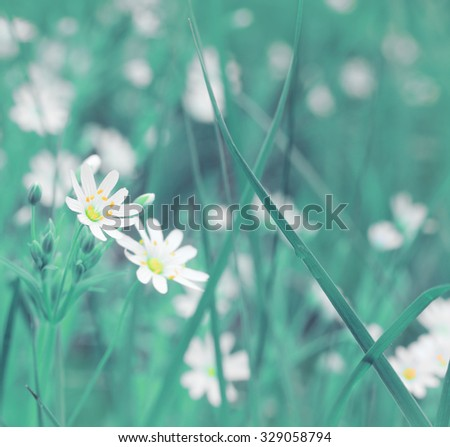 Delicate background for design with wildflowers. Tonal correction. - stock photo