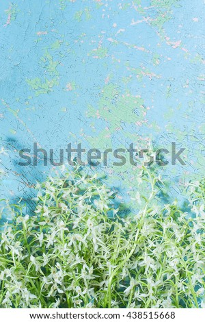 Delicate bouquet of wild orchids, also known as Lesser Butterfly Orchid (Platanthera bifolia) on old cracked blue background with space for text. Vertical - stock photo