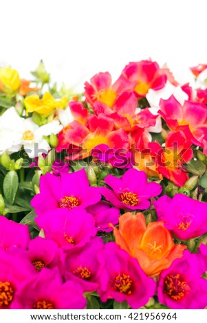 Delicate colorful flowers (selective focus)  - stock photo