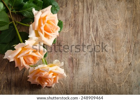 Delicate cream roses from the site  on wooden table - stock photo