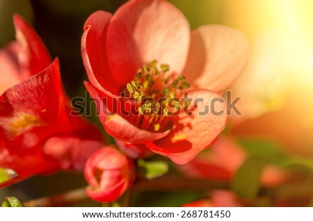delicate flower with sunflare - stock photo