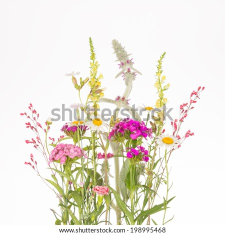 delicate fragile colorful wildflowers with thin stems and green leaves on a white background - stock photo