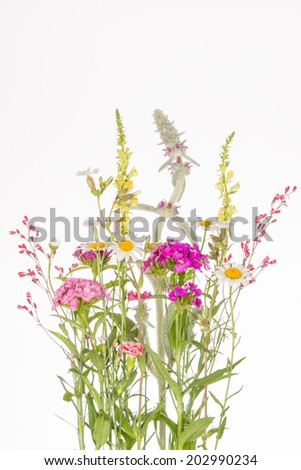 delicate fragile colorful wildflowers with thin stems and leaves on a white background - stock photo