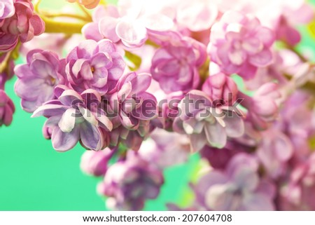 delicate lilac flowers - stock photo