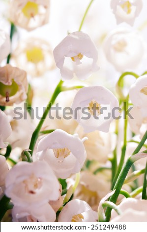 Delicate pink flowers lily of the valley. Lily of the valley closeup. - stock photo