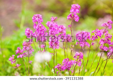 delicate pink flowers meadow, close-up, blurred background - stock photo