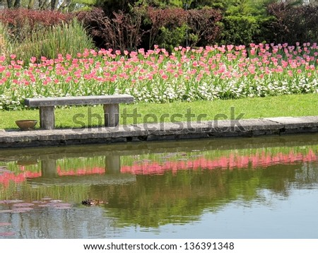 delicate pink tulips and bench in the garden reflections on water - stock photo