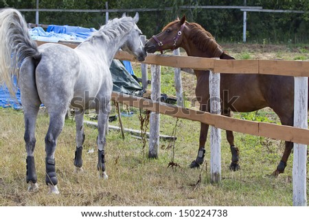 Delicate relations between the two horses. - stock photo