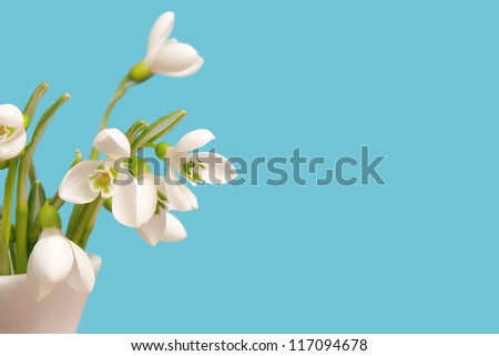 delicate snowdrops on a blue background - stock photo