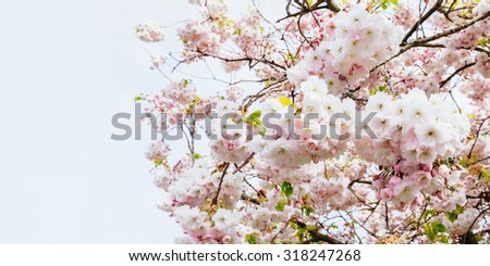 Delicate spring pink tree flowers, horizontal view with copyspace