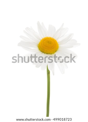Delicate white flower daisy yellow center stock photo royalty free delicate white flower daisy with a yellow center on a thin curved long green stem mightylinksfo