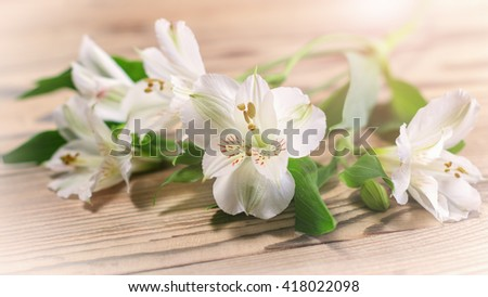 Delicate white flowers in the warm sunshine on a wooden surface. Shallow DOF. Image with toning - stock photo