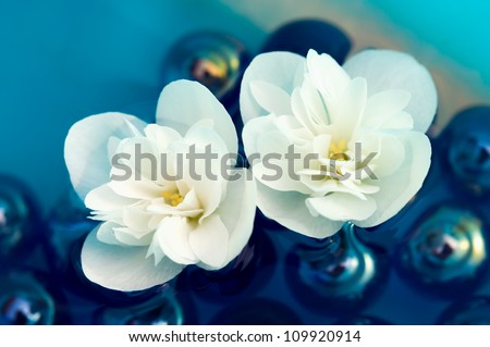 Delicate White Jasmine Flowers on Water - stock photo