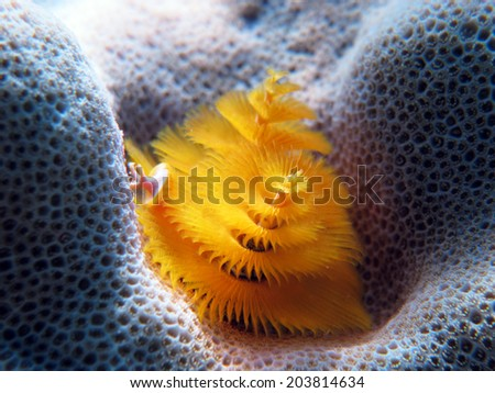 Delicate yellow Christmas tree worm - stock photo