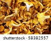 Delicious chanterelle - stock photo
