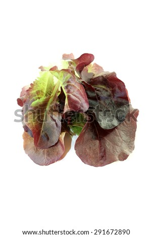 delicious crunchy red lettuce on a bright background - stock photo