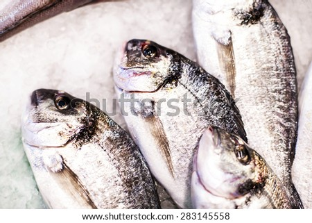 Delicious  Fresh fish on ice on the market. Dorado fish on white iced background - healthy food, diet or cooking concept - stock photo