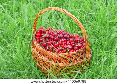 Delicious fresh organic red cherries with green tails in a basket background - stock photo