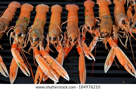 Delicious Grilled Scampi in a row - stock photo