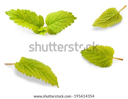 Delicious lemon balm leaf laying on a white table - stock photo