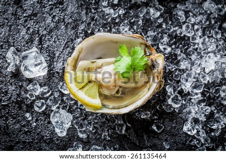 Delicious oysters on crushed ice with lemon - stock photo