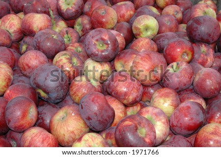Delicious red apples in a farm market bin