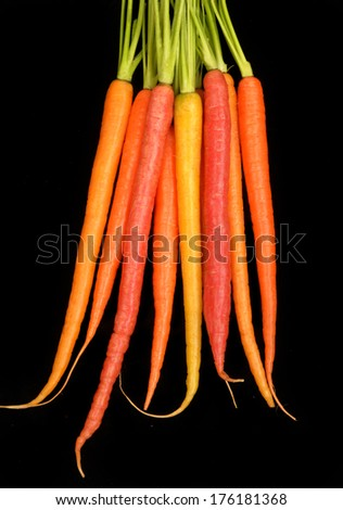 Delicious red, yellow, and orange organic carrots isolated on black. - stock photo