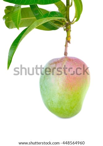 Delicious ripe mango with green leaf on white background, Fresh mango on the branch illustration, mango isolated on white background, Ripe mango isolated on white Clipping Path - stock photo