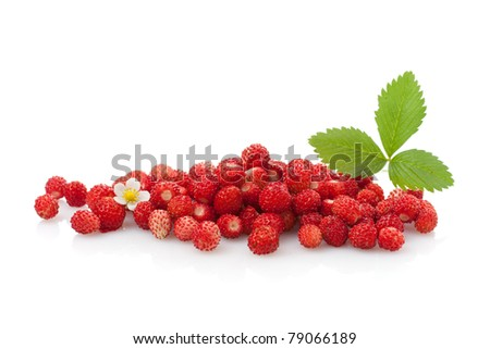 Delicious wild strawberries with green leaves and flower, isolated - stock photo