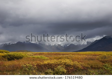 Denali Nat'l Park, Alaska. The colorful fall tundra contrast with the dark rain clouds shrouding the Alaska Range of Mountains.