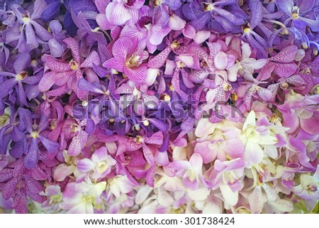dendrobium orchid  on white flower background - stock photo