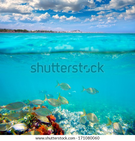 Denia Alicante Marineta Casiana beach underwater with salema fish school [photo illustration]