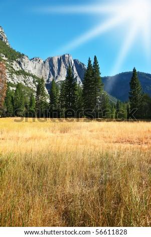 Dense autumn yellow grass in a mountain valley of Yosemite national park in California. - stock photo