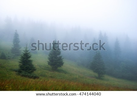 dense fog in the mountains