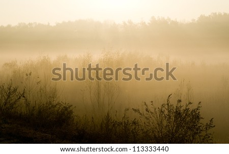 Dense fog lays around grass, trees. it is autumn morning, nature. - stock photo