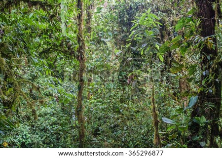 Dense forest in Nambillo Cloud Forest Reserve near Mindo, Ecuador.