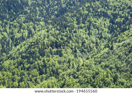 Dense forested hills - stock photo