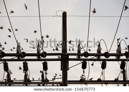 dense high voltage power lines