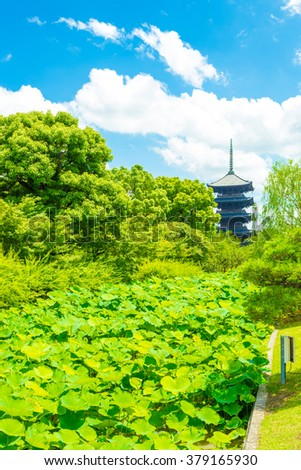 Dense lilypad garden and green trees direct the eyes towards the 5 story pagoda of Toji Temple, the tallest tower in Japan, located in Kyoto on a clear, sunny blue sky day