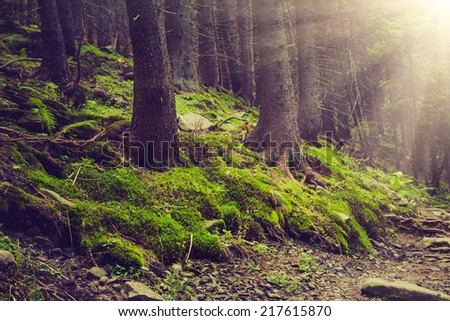 Dense mountain forest and trees with moss in magic light. Filtered image:cross processed vintage effect.  - stock photo