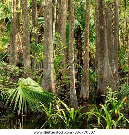 Dense thicket of Bald Cypress and Sabal Palm in Florida Everglades