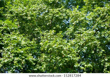 Dense tree foliage under the sun - stock photo